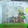 Продам попугая с новой клеткой дешево!!!!